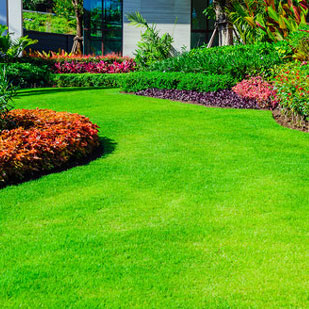 Organic Lawn Care in Westchester NY