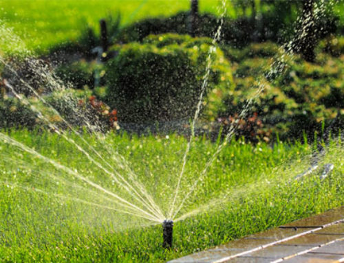Hot Weather Landscaping Tips