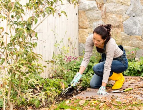 Preparing Your Garden for the Winter